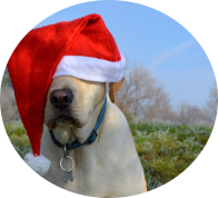 Photo of a dog in Santa hat